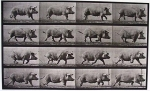 artwork_images_118694_495965_eadweard-muybridge