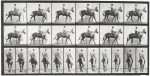 eadweard-muybridge-animal-locomotion-plate-653-photographs-other-zoom